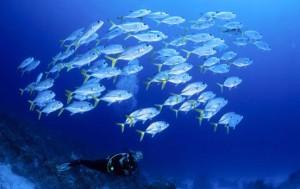 fond marin indonésie