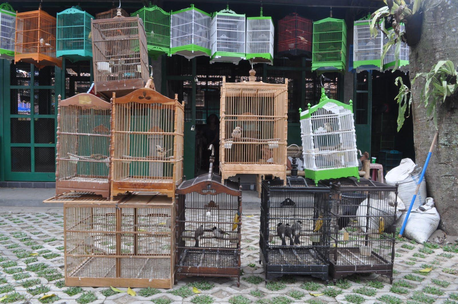 Marché aux oiseaux à Yogyakarta